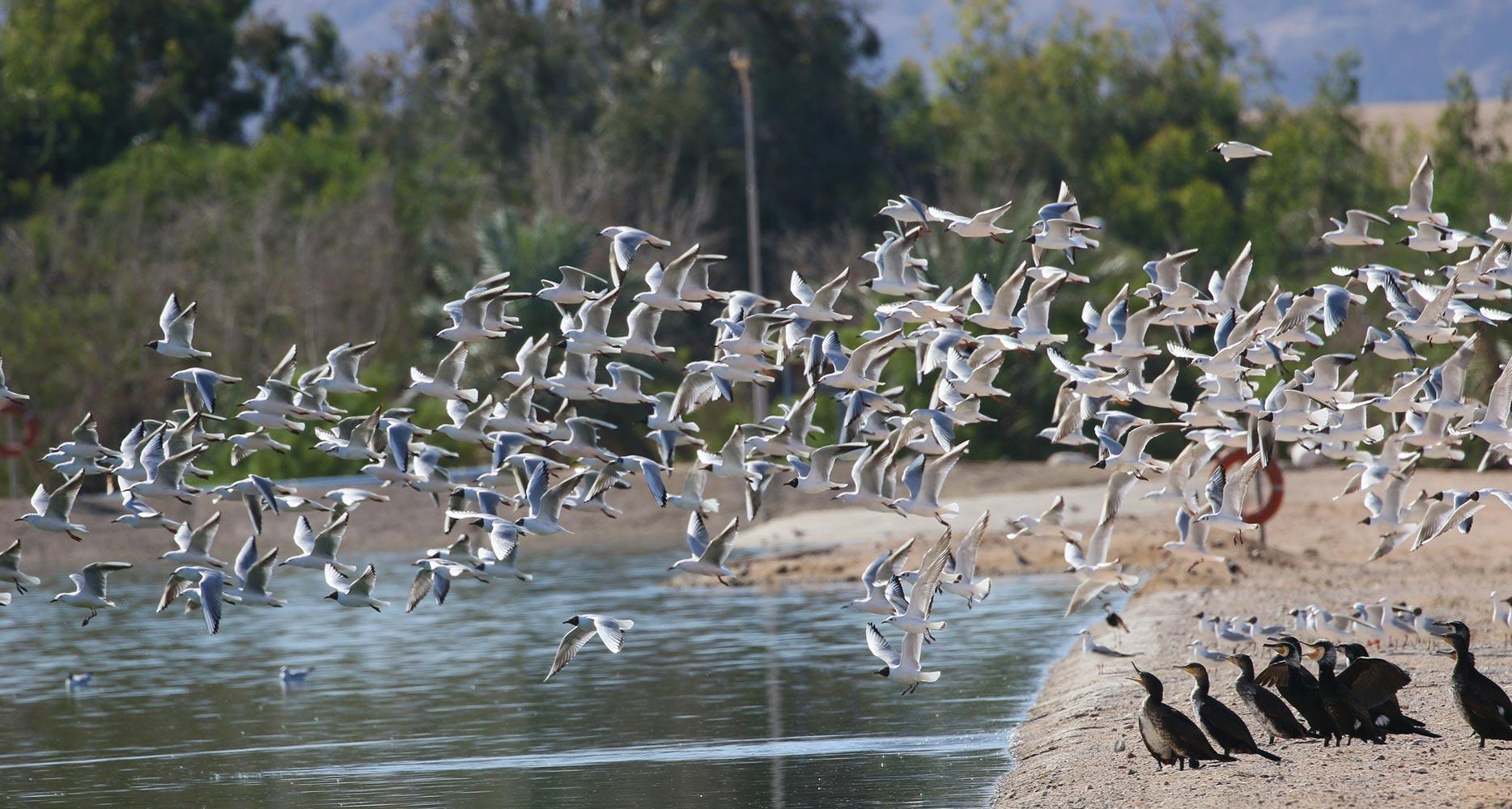 JBW migraiting birds