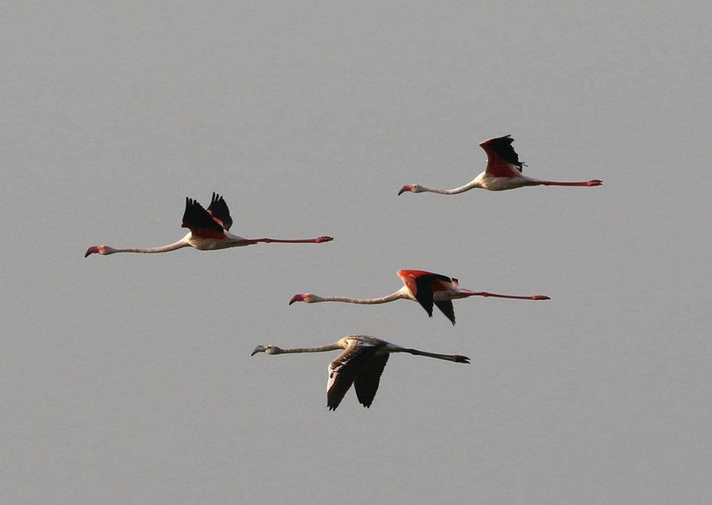 JBW Migratory birds