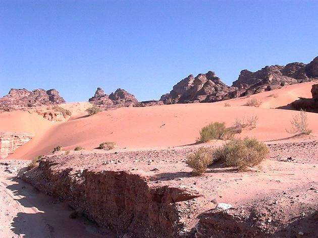 Dana Biosphere Reserve, Red Sand Habitat, south Jordan. Photo: Fares Khoury