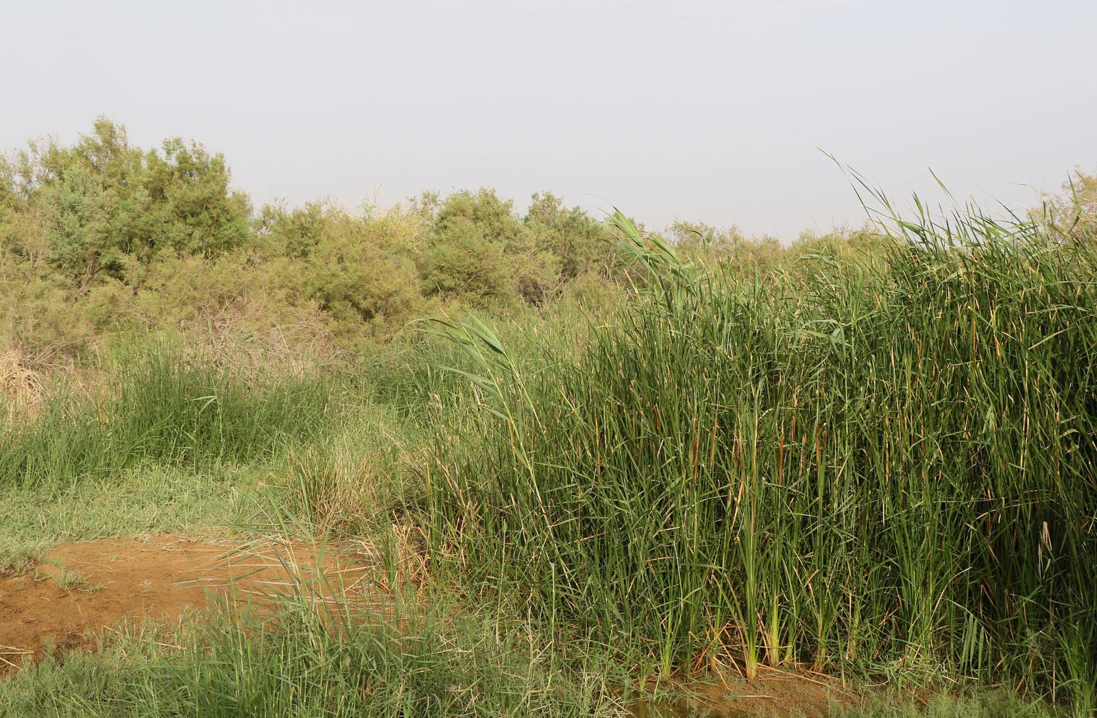 Wadi Gharaba bird habitat
