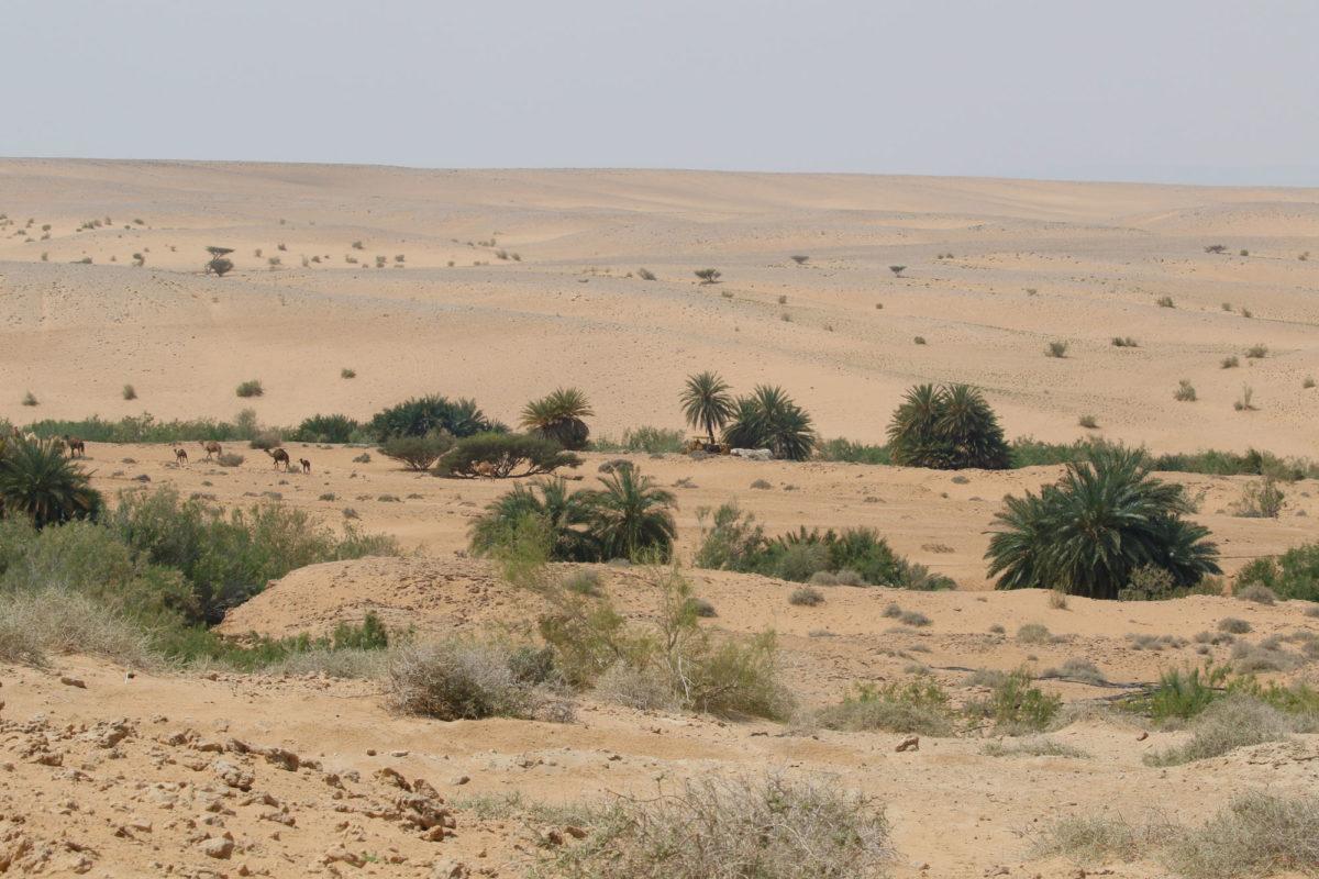 Oasis in Wadi Araba, Jordan
