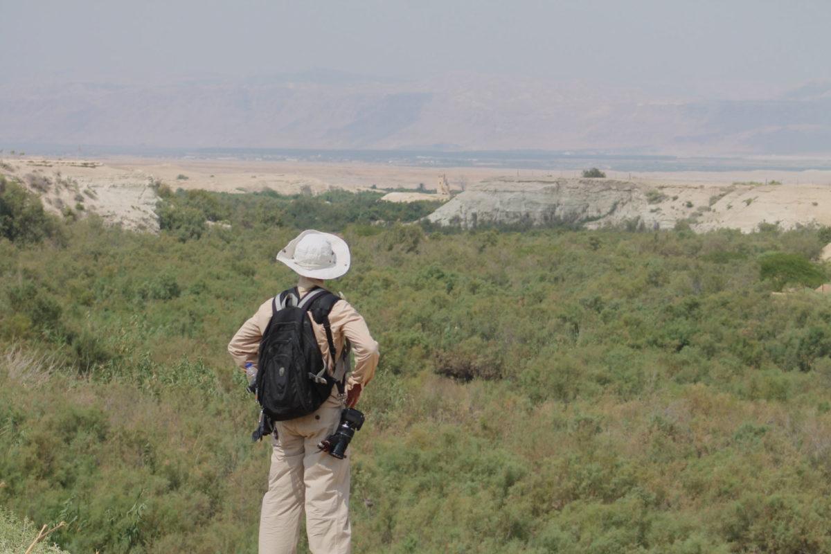 Tamarix wetland habitat JBW