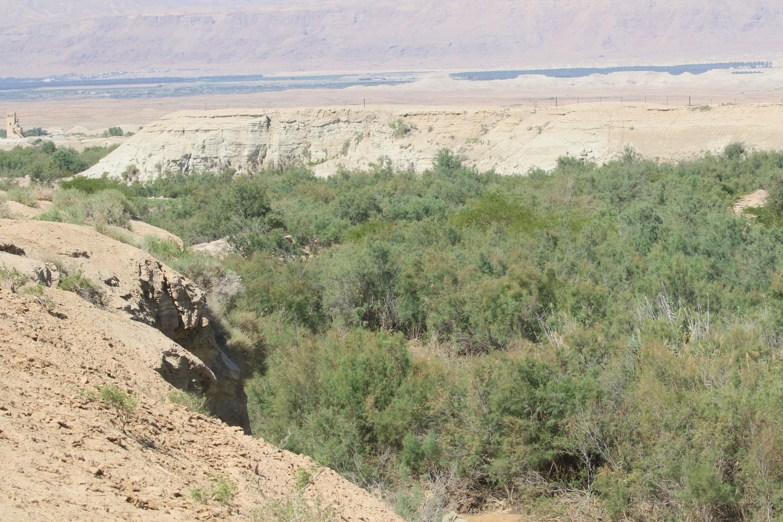 Wadi Gharaba, a special conservation and important bird area in Jordan